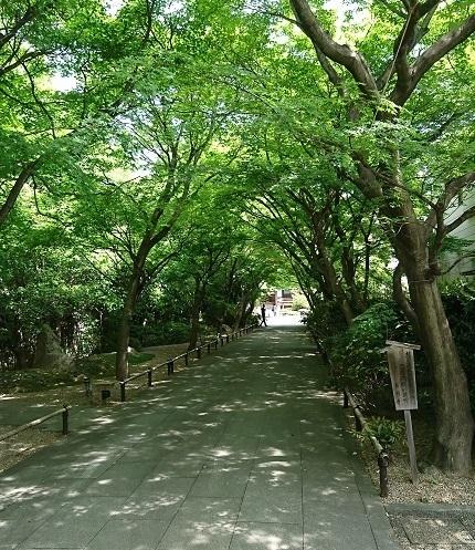 DSC_1876高円寺.jpg