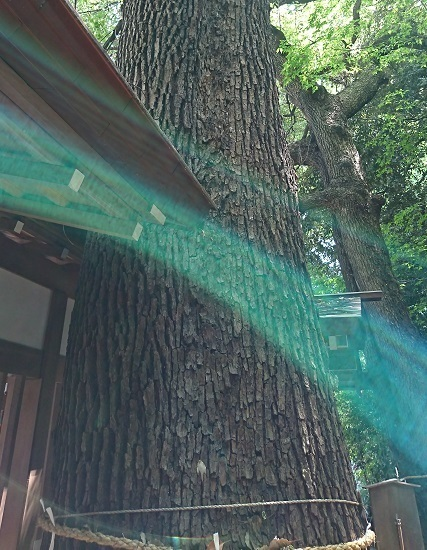 DSC_2275乃木神社.jpg