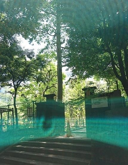 DSC_2333乃木神社.jpg