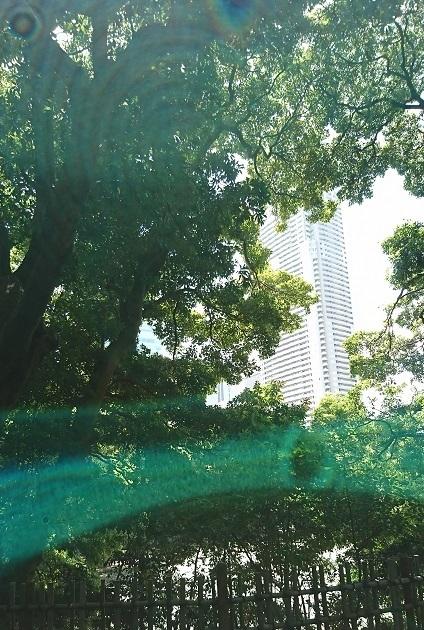 DSC_2881浜離宮.jpg