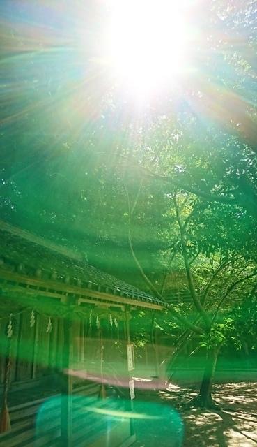 桜井神社DSC_5593.JPG