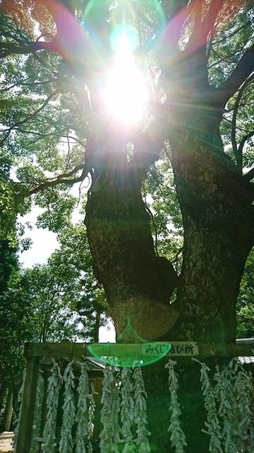 桜井神社DSC_5609.JPG