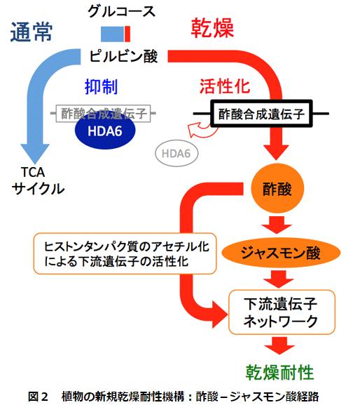 酢酸2.PNG