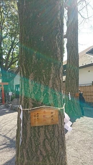 DSC_0296赤龍木.jpg