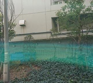 DSC_0584深川龍神.jpg