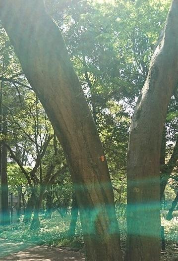 DSC_1205渋沢庭園.jpg