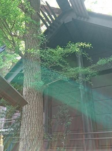 DSC_1867気象神社.jpg