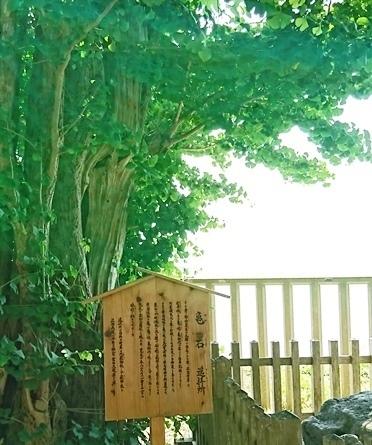 DSC_4215志賀海神社.JPG