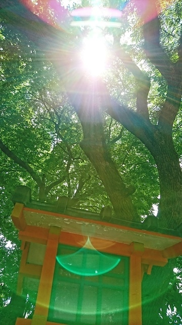 DSC_4485住吉神社.JPG