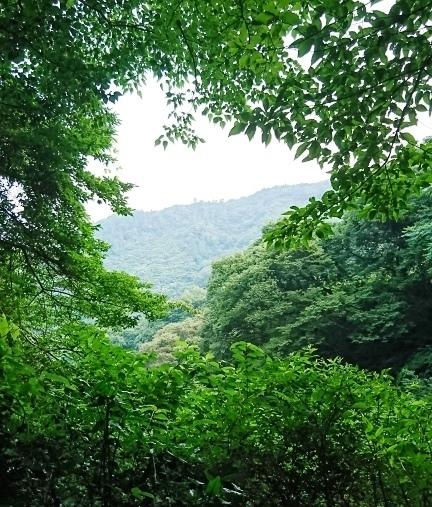 大元神社DSC_5961.JPG