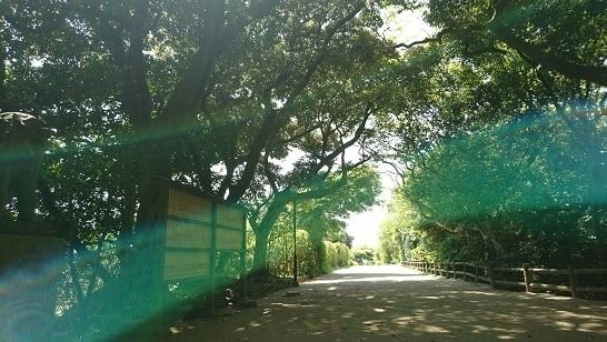 志賀海神社1492840784710.jpg