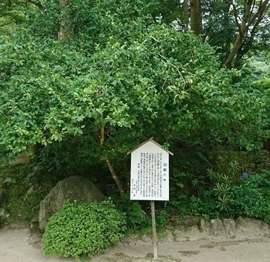 竈神社DSC_6232.JPG
