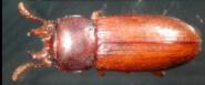 虫.PNG